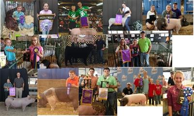 Concord Maid Show Pig Feeding Program - 2016 Customers