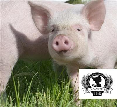Swine Feeds