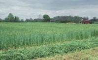 Seed - Winter Wheat